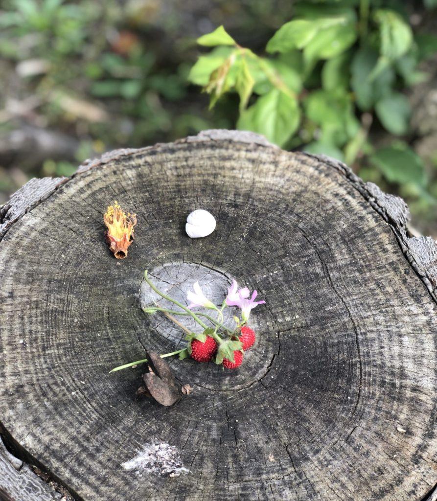 みちくさの庭で拾ったもの